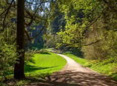 Arboretumbos - Tervuren